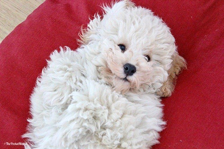 le 5 malattie più frequenti e pericolose del cane